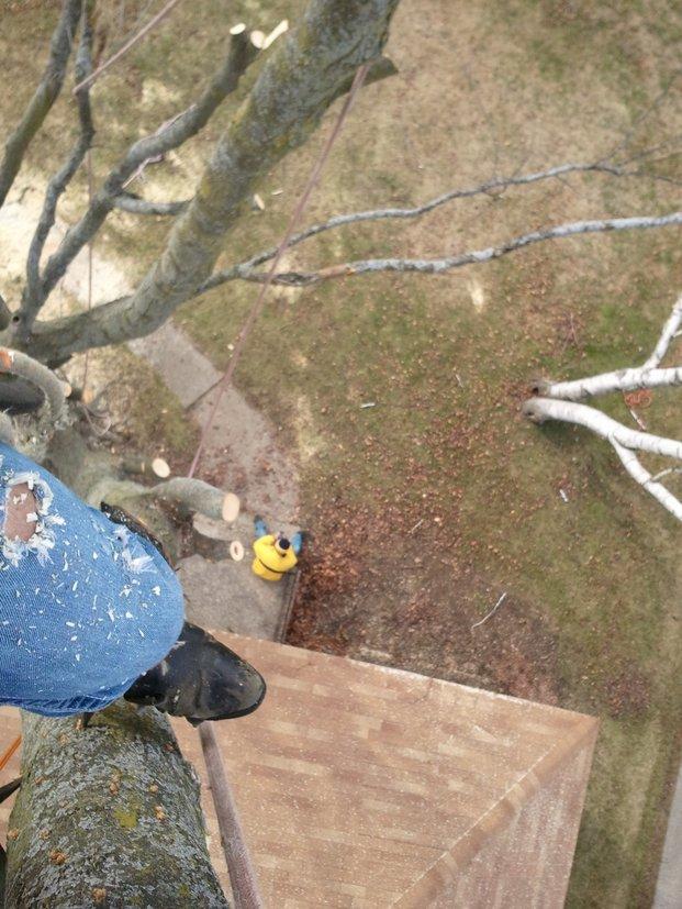 Complete-Tree-Removal-Walker-MI