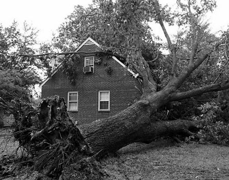 Grand-Rapids-Emergency-Tree-Service