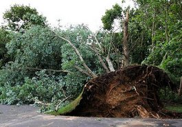 Grand-Rapids-Storm-Damage-Tree-Service