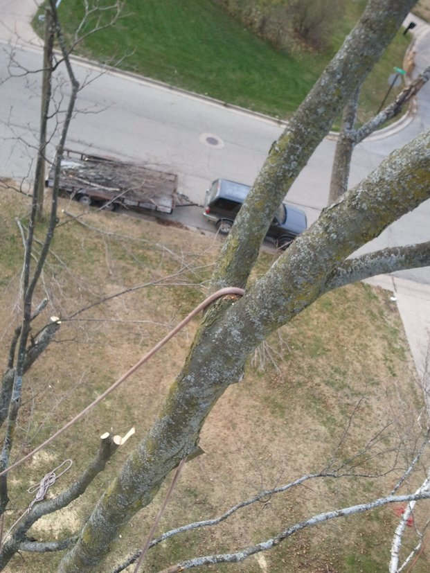 Oak-Tree-Removal-Walker-MI