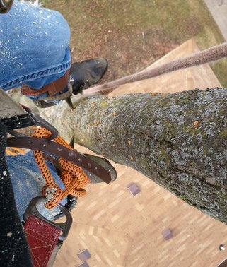 Affordable Tree Service in Grand Rapids MI